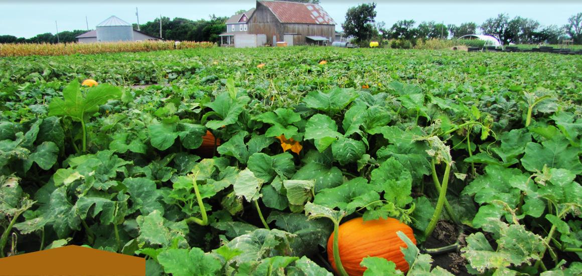 slider-pumpkinpatchb